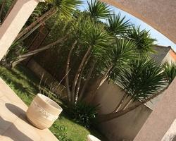 + qu'un jardin... – Sète - Taille d'entretien d'un Yucca elephantipes à Balaruc les bains