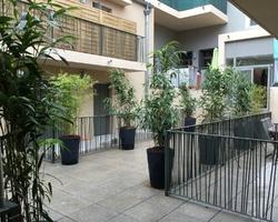 + qu'un jardin... – Sète - Plantation de bambou pour une résidence gérée par FONCIA à Sète