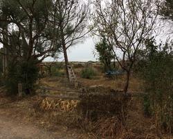 + qu'un jardin... – Sète - Création d'une haie de clôture avec abattage d'un pin mort suite à un incendie à Marseillan