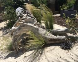+ qu'un jardin... – Sète - Conception/création esprit bord de mer (Sète)